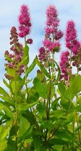hardback flowers